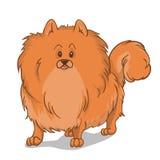 Красный цвет собаки Pomeranian иллюстрация вектора
