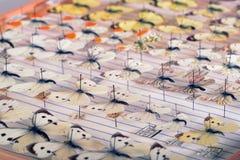 красный цвет собрания бабочки бабочек голубой коробки Различный вид белизн и желтых цветов Стоковые Фотографии RF