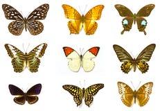 красный цвет собрания бабочки бабочек голубой коробки Стоковые Изображения RF