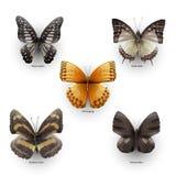 красный цвет собрания бабочки бабочек голубой коробки Стоковые Фотографии RF