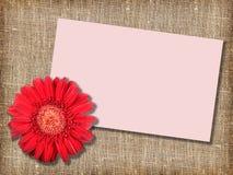 красный цвет сообщения одного цветка карточки Стоковые Фото