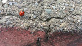 Красный цвет с черным Ladybug точек польки Стоковая Фотография