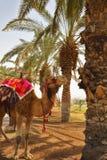 красный цвет ткани верблюда тела Стоковое фото RF