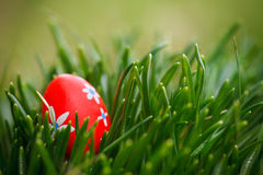 красный цвет травы пасхального яйца Стоковое Изображение