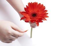 красный цвет удерживания девушки gerbera Стоковая Фотография