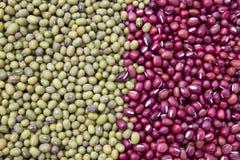 красный цвет фасоли зеленый Стоковое Фото