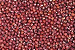 красный цвет фасоли Стоковое Фото