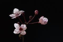 красный цвет цветения Стоковые Фотографии RF