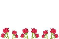 красный цвет цветка граници поднял Стоковые Изображения RF