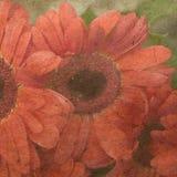 красный цвет цветка карточки Стоковые Изображения RF
