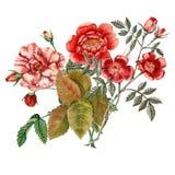 красный цвет цветка поднял Ботаническая иллюстрация акварель Стоковое Изображение RF