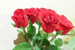 красный цвет цветка поднял Стоковые Фотографии RF