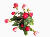 красный цвет цветка поднял Стоковые Изображения