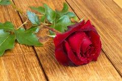 красный цвет цветка поднял Стоковое Изображение RF