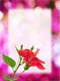 красный цвет цветка предпосылки Стоковое фото RF