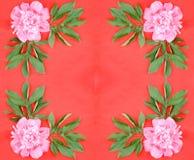 красный цвет цветка предпосылки Стоковое Изображение RF