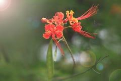 красный цвет цветка предпосылки близкий вверх Стоковые Изображения