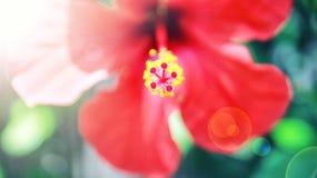 красный цвет цветка предпосылки близкий вверх Стоковое Изображение RF