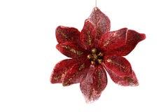 красный цвет цветка рождества Стоковые Фотографии RF