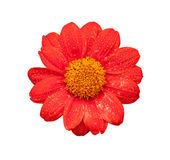 красный цвет цветка свежий стоковое фото