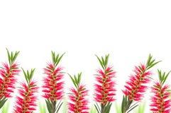 красный цвет цветка щетки бутылки Стоковое Изображение RF