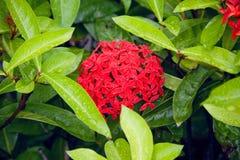 красный цвет цветка стоковое изображение rf