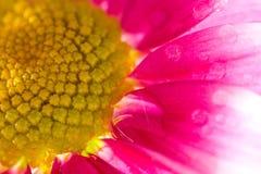 красный цвет цветка Стоковая Фотография