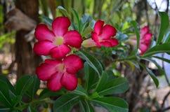 красный цвет цветков розовый Стоковое фото RF