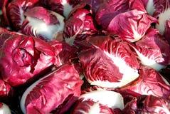 красный цвет цикория Стоковые Фотографии RF