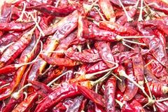 красный цвет чилей горячий Стоковые Изображения RF