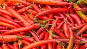 красный цвет чилей горячий Стоковые Фото