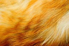 красный цвет шерсти лисицы стоковая фотография
