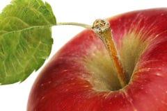 красный цвет яблока близкий вверх Стоковые Фото