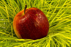 Красный цвет Яблока на траве в дожде падает Стоковое Изображение