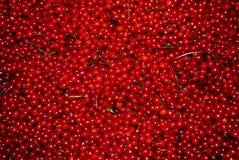 красный цвет ягоды Стоковые Фотографии RF