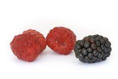 красный цвет ягоды Стоковые Изображения