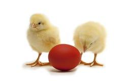 красный цвет яичка цыпленка стоковое фото