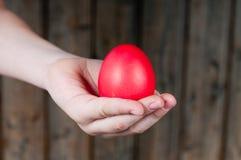 красный цвет яичка Стоковое Изображение RF