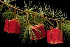 красный цвет 3 сосенки подарка ветви коробок Стоковое Фото