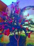 Красный цвет цвет Стоковые Изображения RF