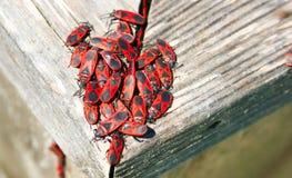 красный цвет beatles черный Стоковое фото RF