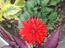 Красный цвет bogota улицы сада совершенный Стоковая Фотография