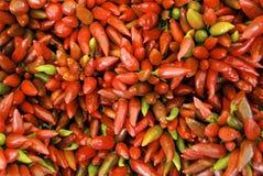 красный цвет chili Стоковое Фото