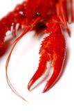 красный цвет crawfish Стоковое Изображение
