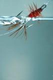 красный цвет frances мухы Стоковая Фотография