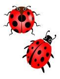 красный цвет ladybird иллюстрация штока