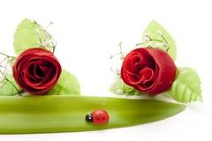 красный цвет ladybug поднял Стоковые Фотографии RF