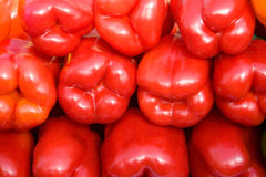 красный цвет paprica предпосылки Стоковые Изображения