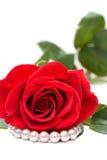 красный цвет perls поднял Стоковое Изображение RF