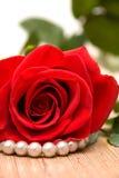 красный цвет perls поднял Стоковая Фотография RF